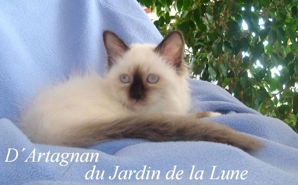 D`Artagnan 1
