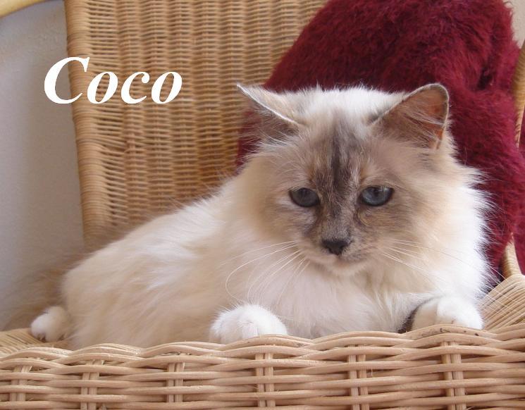 Coco 4 Jahre