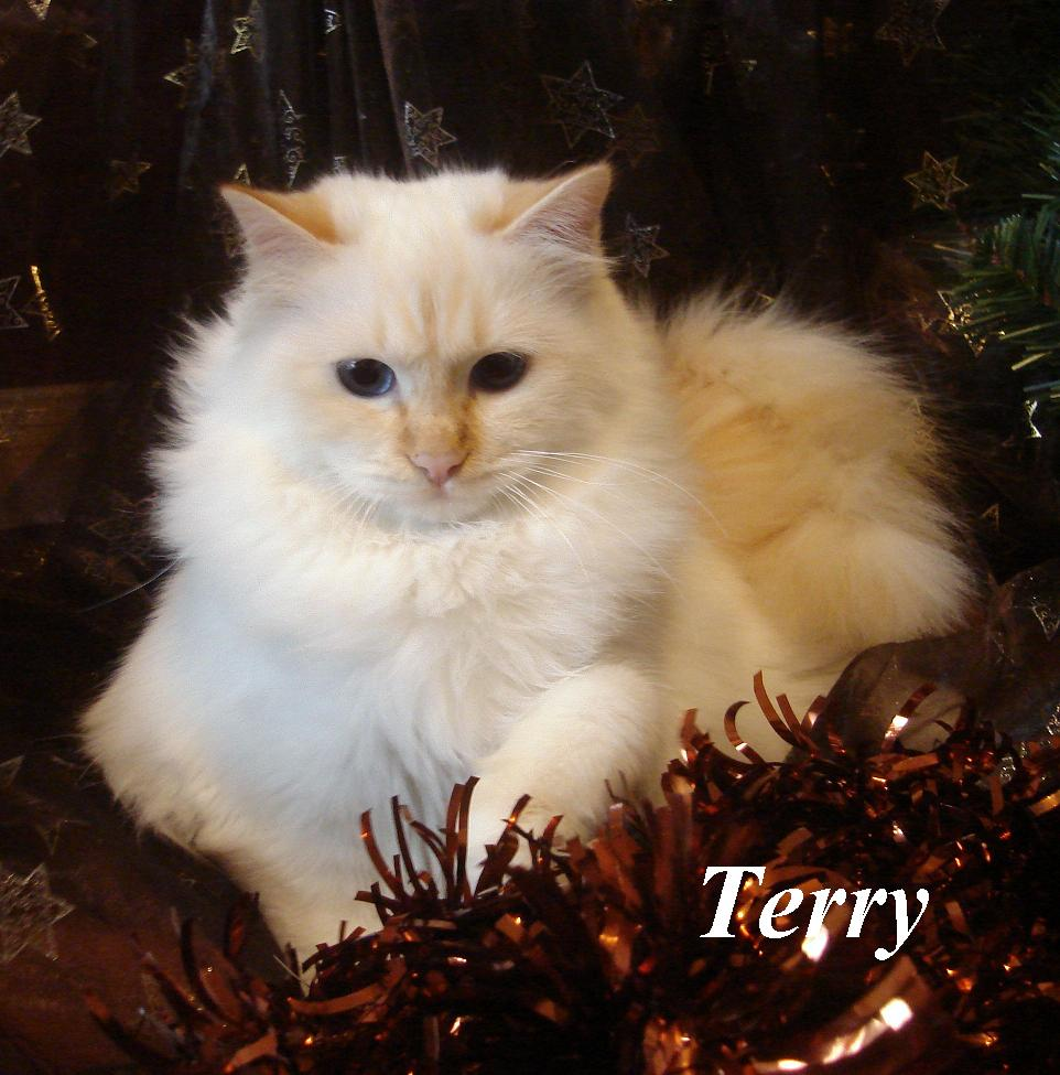 Terry erwachsen