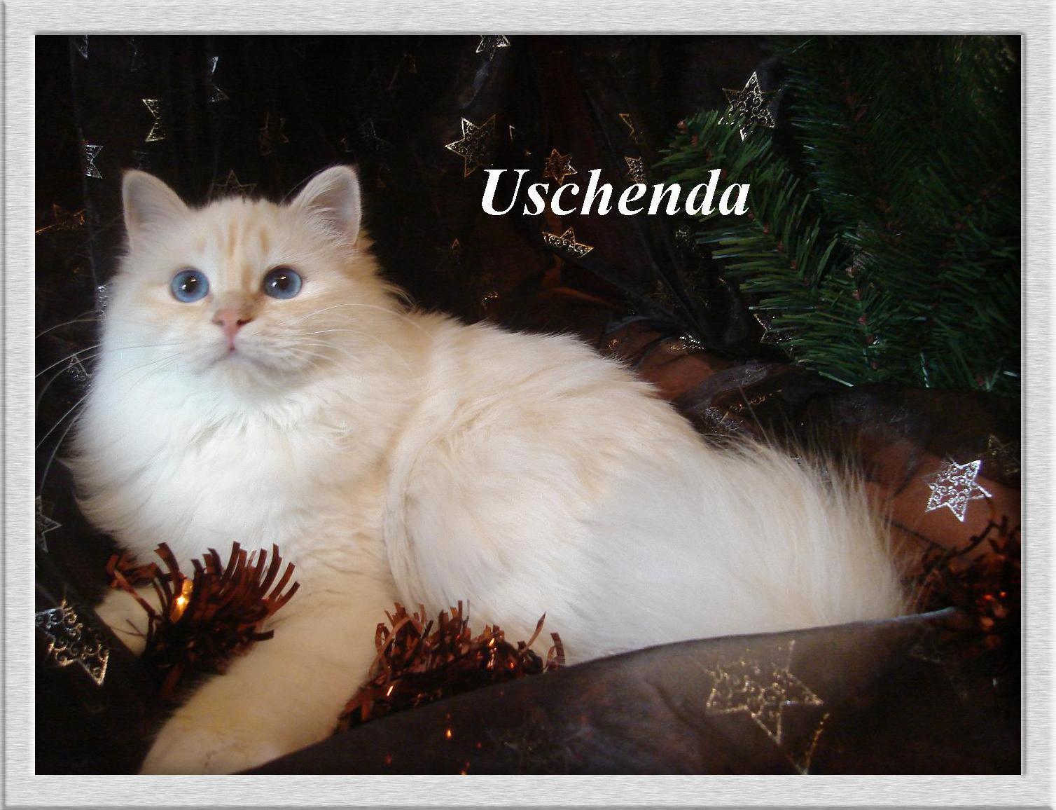 Uschenda the cosy One