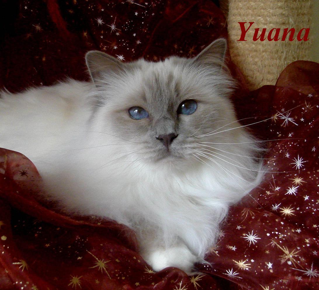 Yuana 8 Jahre