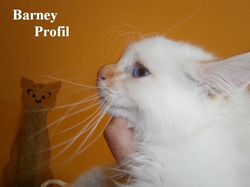 Barney Profil