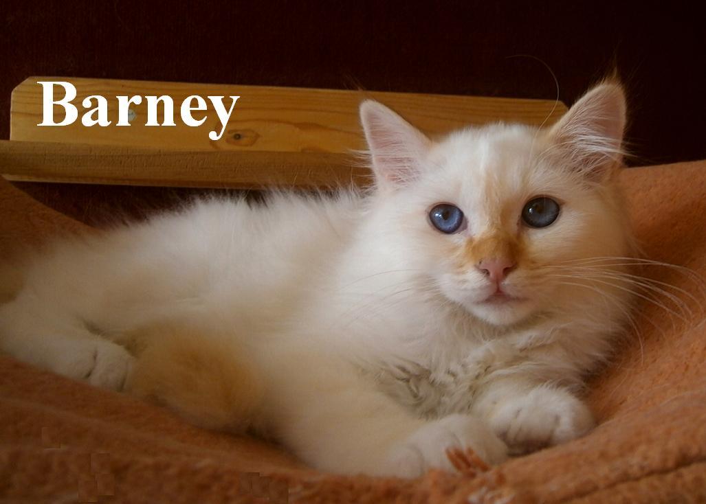 Barney 4 M
