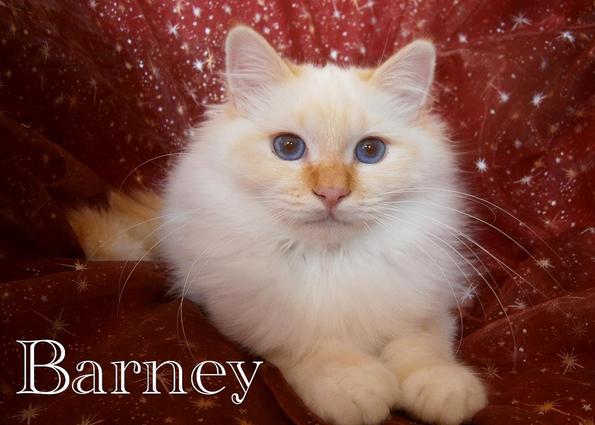Barney 6 M