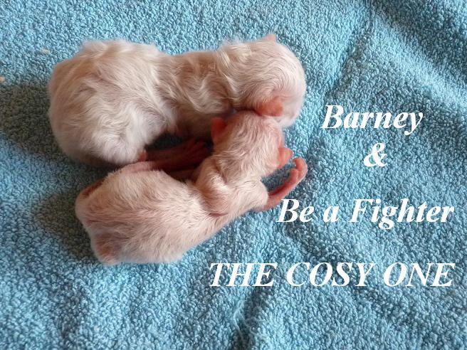 Barney und Fighter