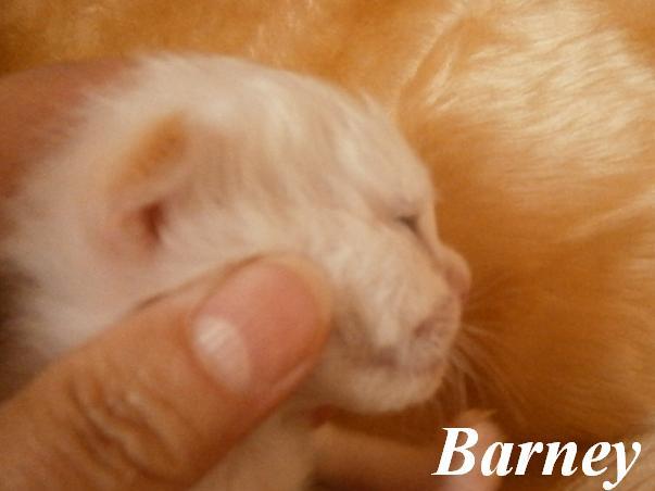 Barney Babyprofil