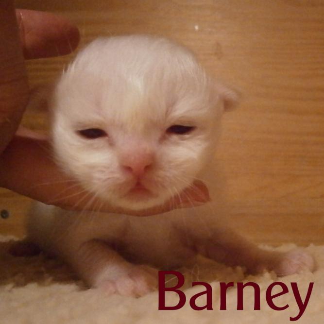 Barney 2 Wochen