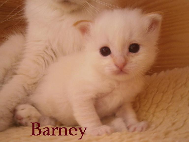 Barney 4 Wochen