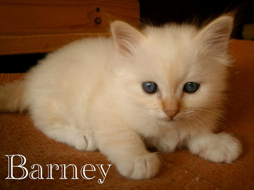 Barney 6 Wochen