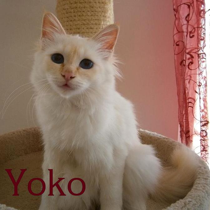 Yoko jung
