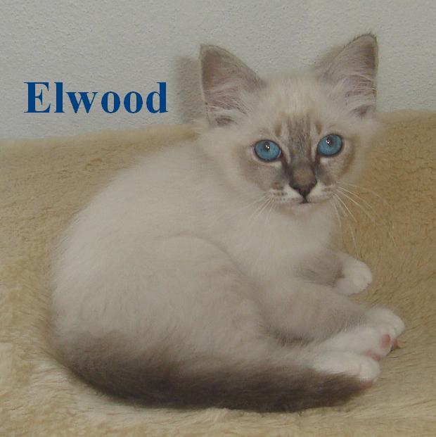 Elwood klein