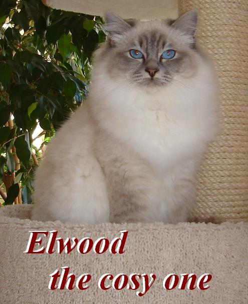 Elwood groß