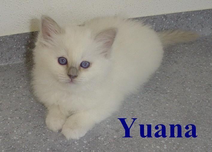 Yuana 7 Wochen