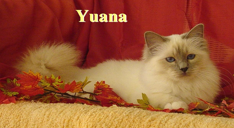 Yuana Herbst 05