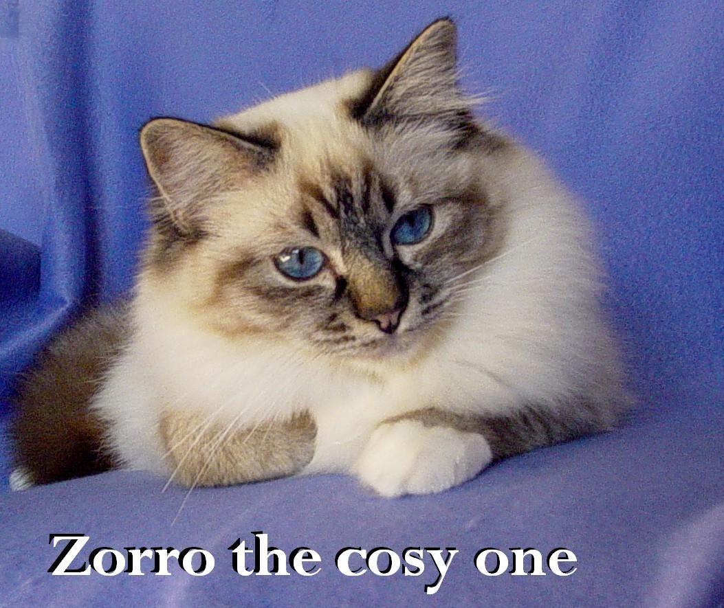 Zorro erwachsen